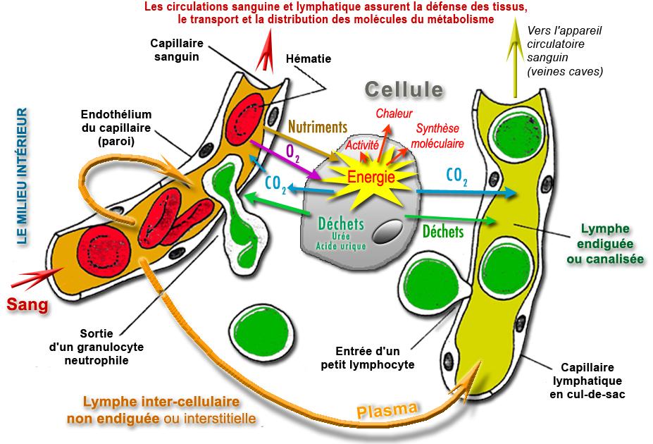 ARN TÉLÉCHARGER RASTOP MOLÉCULE